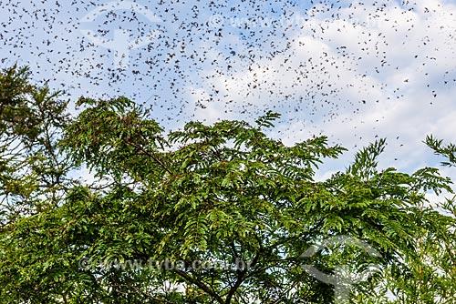 Formigas voadoras ao nascer do sol - Mirante Dona Marta  - Rio de Janeiro - Rio de Janeiro (RJ) - Brasil