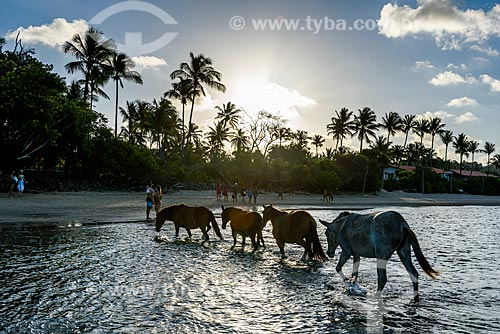 Cavalos na orla da 3ª Praia  - Cairu - Bahia (BA) - Brasil