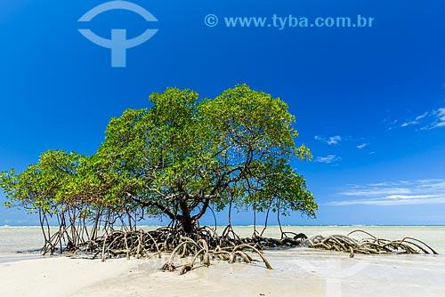 Mangue na Praia do Encanto  - Cairu - Bahia (BA) - Brasil