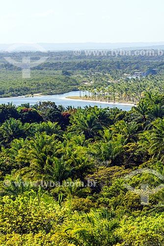 Vista geral de coqueiros na Costa do Dendê  - Cairu - Bahia (BA) - Brasil