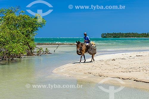 Cavalo na orla da Praia de Bainema  - Cairu - Bahia (BA) - Brasil