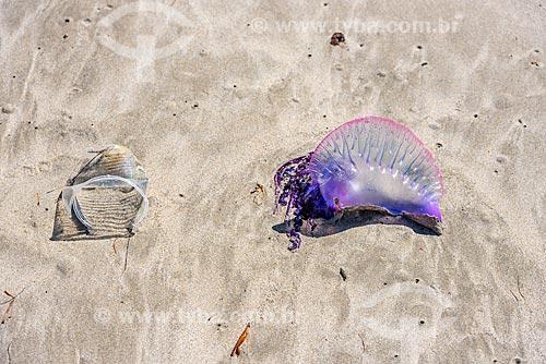 Copo descartável e Caravela-portuguesa (Physalia physalis) na orla da Praia de Bainema  - Cairu - Bahia (BA) - Brasil