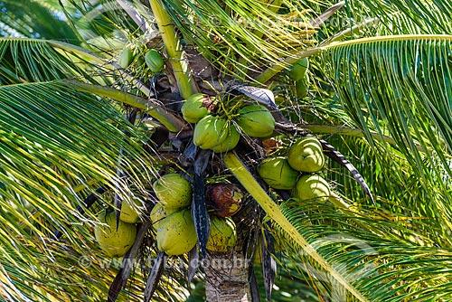 Detalhe de coqueiro na Praia de Bainema  - Cairu - Bahia (BA) - Brasil