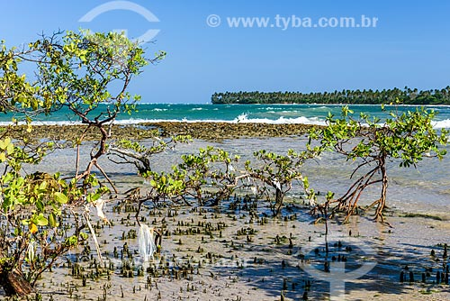 Manguezal na orla da Praia de Bainema  - Cairu - Bahia (BA) - Brasil