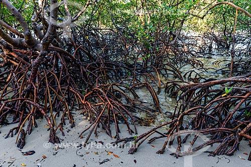 Manguezal próximo à Praia de Bainema  - Cairu - Bahia (BA) - Brasil