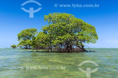 Manguezal na orla da Ponta dos Castelhanos  - Cairu - Bahia (BA) - Brasil