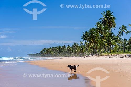 Cachorro na orla da Praia da Bombaça  - Maraú - Bahia (BA) - Brasil