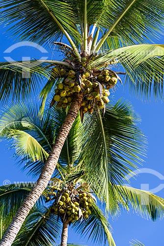 Detalhe de Praia de Três Coqueiros  - Maraú - Bahia (BA) - Brasil