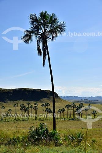 Vista do Jardim de Maytrea no Parque Nacional da Chapada dos Veadeiros  - Alto Paraíso de Goiás - Goiás (GO) - Brasil