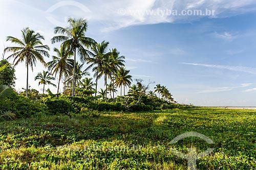 Orla da Praia do Pontal  - Itacaré - Bahia (BA) - Brasil