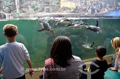 Turistas observando Pinguim-saltador-da-rocha (Eudyptes chrysocome) no Two Oceans Aquarium (Aquário Dois Oceanos)  - Cidade do Cabo - Província do Cabo Ocidental - África do Sul