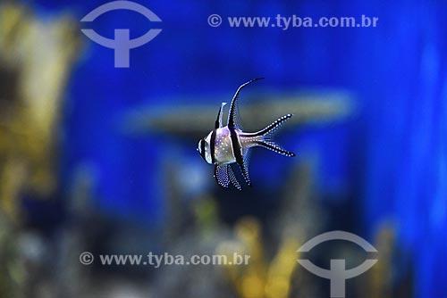 Detalhe de peixe ornamental no AquaRio - aquário marinho da cidade do Rio de Janeiro  - Rio de Janeiro - Rio de Janeiro (RJ) - Brasil