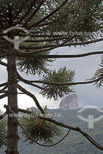 Vista de Araucária (Araucaria angustifolia) com a Pedra do Picú ao fundo  - Itamonte - Minas Gerais (MG) - Brasil