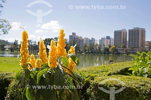Detalhe de flor do camarão-amarelo (Pachystachys lutea) às margens do Lago de São Lourenço no Parque das Águas São Lourenço com prédios ao fundo  - São Lourenço - Minas Gerais (MG) - Brasil