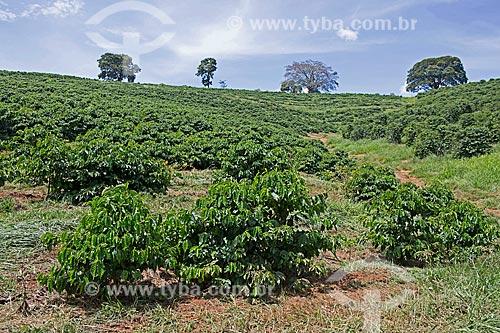 Plantação de café na Fazenda Serra Azul  - Carmo de Minas - Minas Gerais (MG) - Brasil