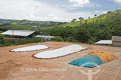 Silagem de milho para servir de alimento ao gado protegidas por lonas na Fazenda Serra Azul  - Carmo de Minas - Minas Gerais (MG) - Brasil