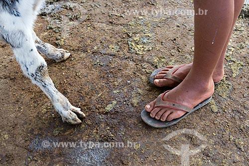 Detalhe da pata de bezerro e pés de menino na Fazenda Serra Azul  - Carmo de Minas - Minas Gerais (MG) - Brasil