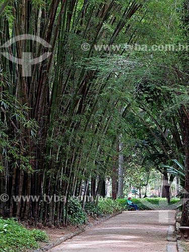 Alameda de bambu no Jardim Botânico do Rio de Janeiro  - Rio de Janeiro - Rio de Janeiro (RJ) - Brasil