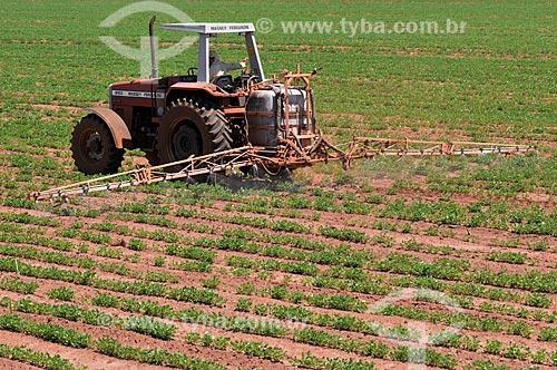 Trator aplicando defensivos em plantação de amendoim (Arachis hypogaea)  - Barretos - São Paulo (SP) - Brasil
