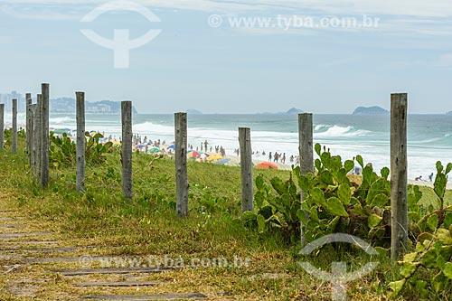 Vegetação de Restinga na Praia da Reserva  - Rio de Janeiro - Rio de Janeiro (RJ) - Brasil