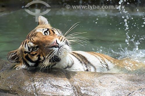 Detalhe de tigre (Panthera tigris) no Jardim Zoológico do Rio de Janeiro  - Rio de Janeiro - Rio de Janeiro (RJ) - Brasil