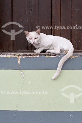 Detalhe de gato em janela de casa em Iguape  - Iguape - São Paulo (SP) - Brasil