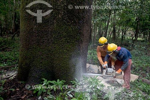 Detalhe de extração sustentável da madeira na Reserva de Desenvolvimento Sustentável Mamirauá  - Tefé - Amazonas (AM) - Brasil