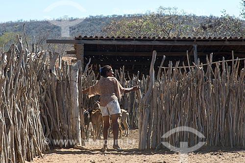 Mulher fechando curral para a criação de cabra (Capra aegagrus hircus) na Aldeia Travessão de Ouro - Tribo Pipipãs  - Floresta - Pernambuco (PE) - Brasil