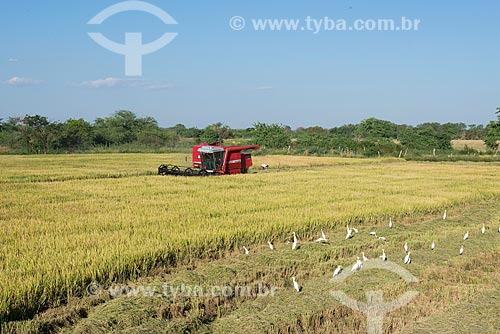 Colheita mecanizada de arroz na zona rural da Tribo Truká  - Cabrobó - Pernambuco (PE) - Brasil