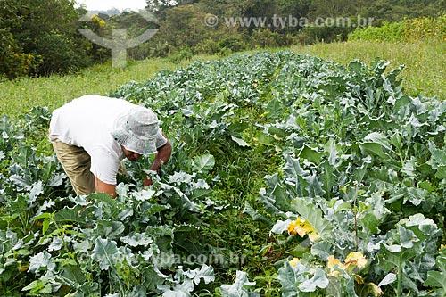 Detalhe de trabalhador rural colhendo brócolis  - Brumadinho - Minas Gerais (MG) - Brasil