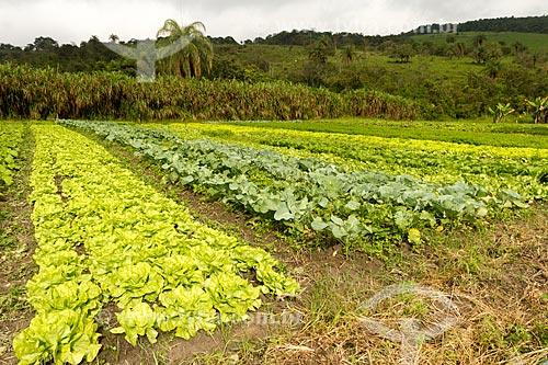 Detalhe de plantação de hortaliças  - Brumadinho - Minas Gerais (MG) - Brasil