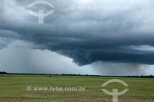 Plantação de soja recebendo chuva  - Ariquemes - Rondônia (RO) - Brasil