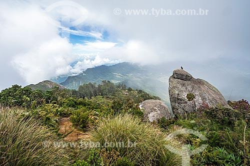 Urubu-de-cabeça-preta (Coragyps atratus) pousado no Pico da Caledônia no Parque Estadual dos Três Picos  - Nova Friburgo - Rio de Janeiro (RJ) - Brasil
