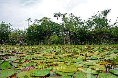 Igarapé do Jamaraquá - Floresta Nacional do Tapajós  - Belterra - Pará (PA) - Brasil