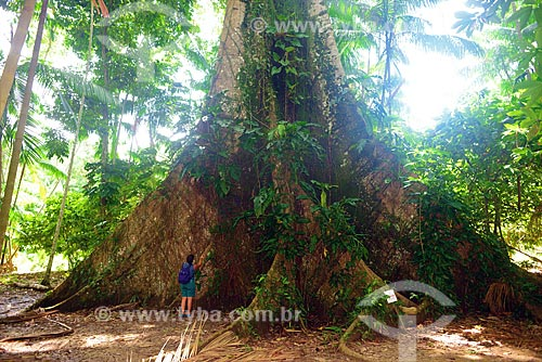 Tronco de árvore Sumaúma (Ceiba pentandra)  - Belém - Pará (PA) - Brasil