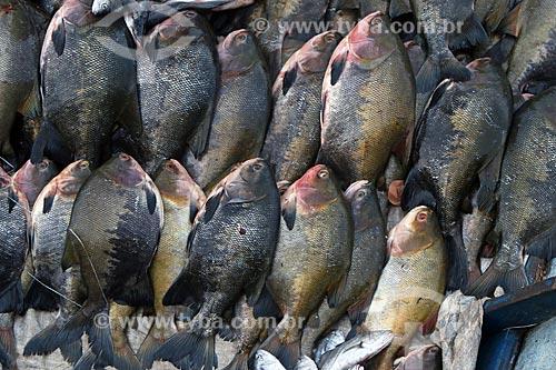 Tambaquis (Colossoma macropomum) no Mercado de Pescado no porto de Manaus  - Manaus - Amazonas (AM) - Brasil