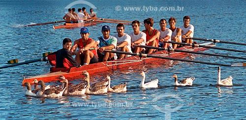 Treino de canoagem interrompido na Lagoa Rodrigo de Freitas por bando de gansos - década de 90  - Rio de Janeiro - Rio de Janeiro (RJ) - Brasil
