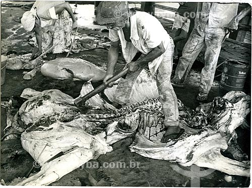 Homem abatendo gado na zona rural da cidade de Iguaí  - Iguaí - Bahia (BA) - Brasil