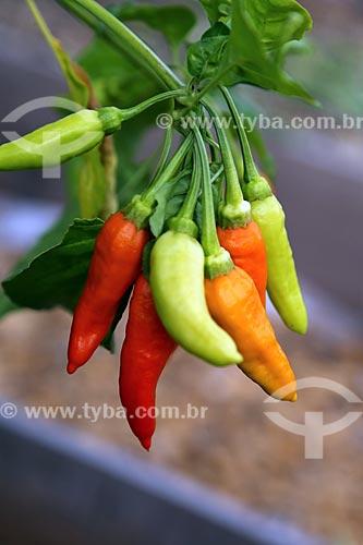 Detalhe de pimentas  - Alvarado - Veracruz - México