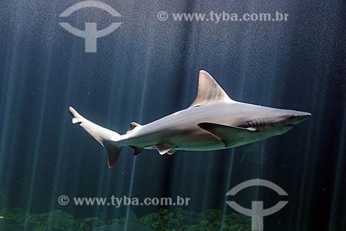 Tubarão no Acuario de Veracruz (Aquário de Veracruz)  - Veracruz - Veracruz - México