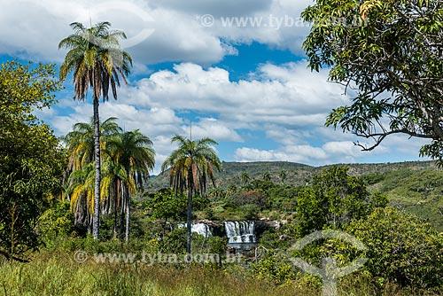Macaúba (Acrocomia aculeata) próximo à Cachoeira Grande na Serra do Cipó  - Santana do Riacho - Minas Gerais (MG) - Brasil