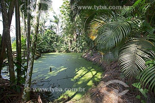 Detalhe de lagoa com lemna gibba - uma das menores plantas aquáticas do mundo - no Jardim dos Hemerocallis na Agrícola da Ilha  - Joinville - Santa Catarina (SC) - Brasil
