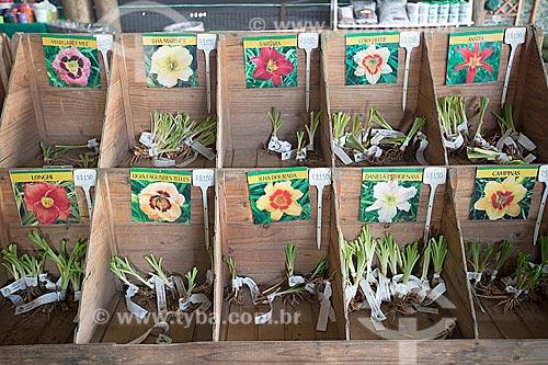 Mudas à venda no Jardim dos Hemerocallis na Agrícola da Ilha  - Joinville - Santa Catarina (SC) - Brasil