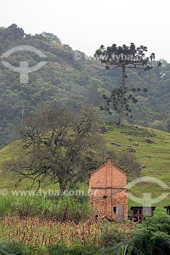 Casa na zona rural da Vila Itoupava com Araucária (Araucaria angustifolia) ao fundo  - Blumenau - Santa Catarina (SC) - Brasil