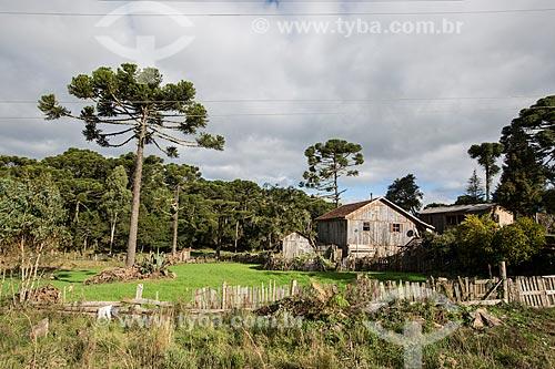 Casa de colono com araucárias (Araucaria angustifolia) às margens da Rota do Sol - Rodovia RS-453  - Rio Grande do Sul (RS) - Brasil