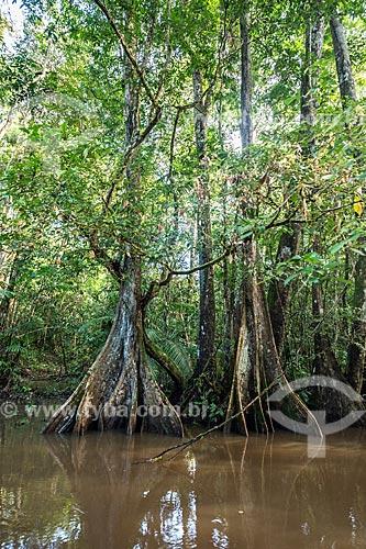 Detalhe de tronco de Igarapé Amazonas na Reserva de Desenvolvimento Sustentável do Iratapuru  - Laranjal do Jari - Amapá (AP) - Brasil