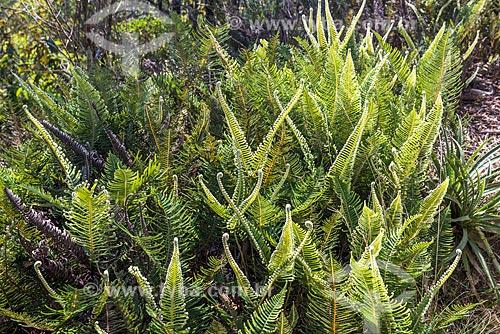 Vegetação típica da Serra da Mantiqueira no Parque Nacional de Itatiaia  - Itatiaia - Rio de Janeiro (RJ) - Brasil