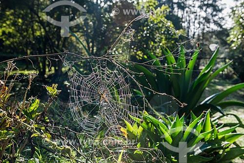 Detalhe de teia de aranha na zona rural do distrito de Visconde de Mauá  - Resende - Rio de Janeiro (RJ) - Brasil