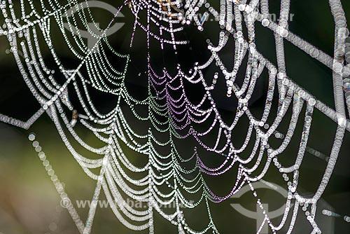 Detalhe de teia de aranha com gotas dágua na zona rural do distrito de Visconde de Mauá  - Resende - Rio de Janeiro (RJ) - Brasil