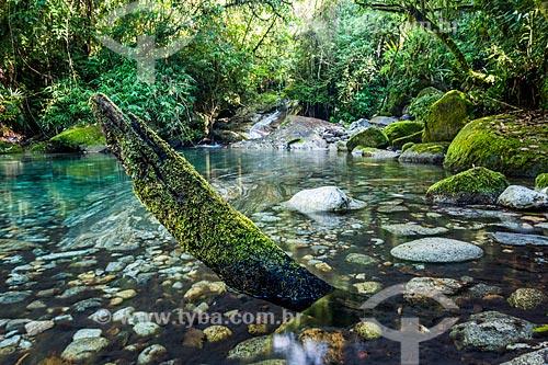 Poço das Bromélias na Área de Proteção Ambiental da Serrinha do Alambari  - Resende - Rio de Janeiro (RJ) - Brasil